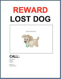 lost and found flyers 29 best tips hints to help with lost found dogs images on pinterest