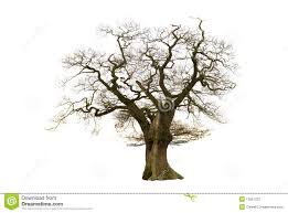 bare apple tree clipart. royalty-free stock photo. download old bare tree apple clipart