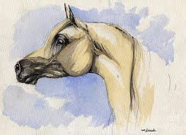 arabian painting the grey arabian horse 12 by angel ciesniarska