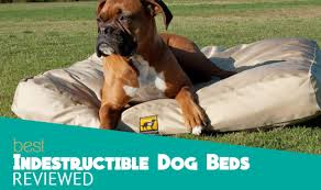 full size of bed dog proof aluminium all kuranda chew beds indestructible large resistant bed