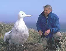 Resultado de imagen para Albatros errante