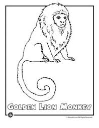 Small Picture Rainforest Animals Coloring Pages Printable Rainforest Animal