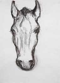 horse face drawing front. Exellent Face Drawings And Horse Face Drawing Front