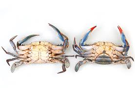 Md Crab Size Chart National Aquarium Blue Crab