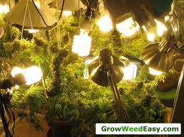 easy beginner grow cans guide w cfl grow lights how to grow night gardening grow lights cans and growing weed