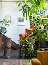 Decorating with houseplants: wild at home thejoyofplants
