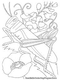Small Picture Printable Bug Coloring Pages For Kids CoolbKids Insect Coloring