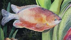 how to paint a fish in watercolor