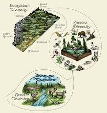 Species Diversity Definition Abmi What Is Biodiversity