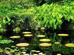 florida s 11 best botanical gardens