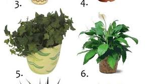 Remarkable Safe House Plants For Cats Contemporary - Best ...