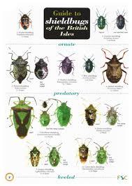 Shield Bugs Of The British Isles Laminated Id Chart