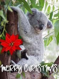 Koala's Free Christmas Email Cards