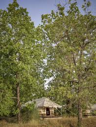 Bagh Villas <b>Jungle Camp</b> & Spa (Индия Канха) - Booking.com
