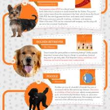 infographic most por dog breeds and their mon but natural