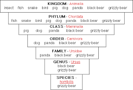 Bear Classification Chart Classification Interdependence Of Life