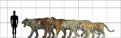 A1 84x59cm Poster Of Big Felines Size Chart