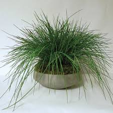 picture artificial plants for office decor