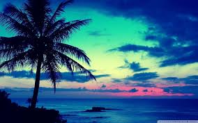 tropical sunrise wallpaper