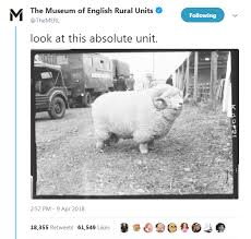 The History Behind An Absolute Unit The Merl