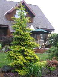 Small Picture 126 best Conifers images on Pinterest Evergreen garden