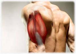 5 best triceps exercises to build