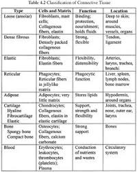 Tissue Chart Answer Key 63 Best Histology Images Anatomy Physiology Physiology