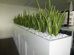office planter boxes. ideas about corporate office decor on pinterest planter box of mother in laws tongue for a room divider plants supplied boxes i