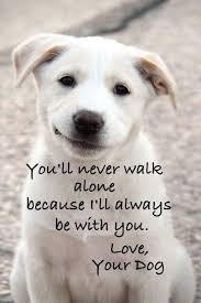 Image result for loving dogs