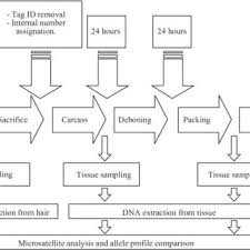 Meat Processing Flow Chart Flow Chart Of A Meat Processing Plant And Details Of