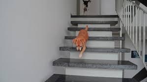 Diskutiere treppensteigen junger hunde !!! Welpen Und Treppen Ab Wann Durfen Welpen Treppen Steigen