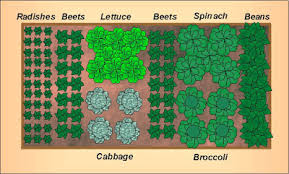 fall garden vegetables. fall vegetable garden layout for a 4\u0027x8\u2032 raised bed vegetables f