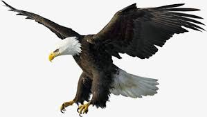 eagles clipart free download. Contemporary Free Eagle Eagle Clipart PNG Image And And Eagles Free Download G