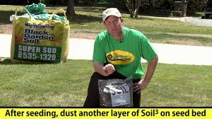 Diy Sod How To Fix Bare Patches In A Lawn With Grass Seed Youtube