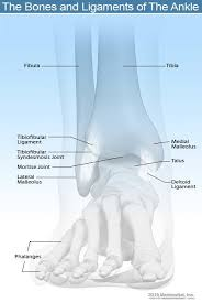 Broken Ankle Vs Sprain Symptoms And Recovery Time