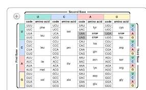 Universal Genetic Code Chart 15 Use The Chart Below To Determine The Amino Acid Sequence