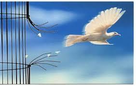 Libertad y derechos humanos