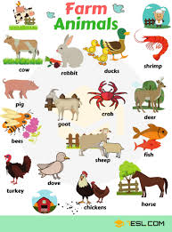 Animal Names Types Of Animals With List Pictures