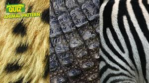 Animal Patterns Custom Which Animal Pattern Are You