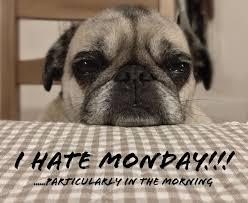Mondayitis, Monday Meme, Monday Memes, | Funnies | Pinterest ... via Relatably.com