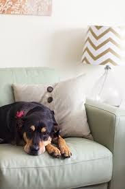 How to Keep Your Home Safe and the Dog f the Couch
