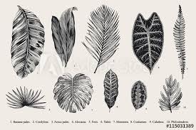 Set Leaf Exotics Vintage Vector Botanical Illustration Black And