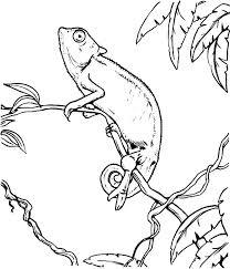 Print Coloring Page Chameleon Pens Pages Trend Chameleo