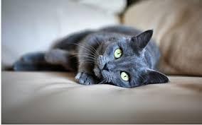 Tylenol Cat Barca Fontanacountryinn Com