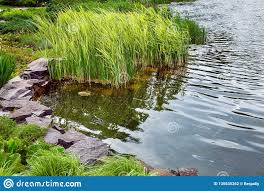 Artificial Pond Design Artificial Pond In The Backyard Stock Photo Image Of