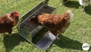 Backyard Chicken Coops   Delivered To Your Door