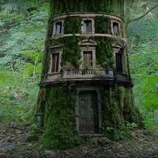 Image result for tree growing through buildings pinterest