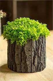 Wood Bark Concrete Pot