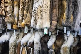 fur coats for at david green master furrier on feb 24 loren