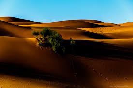 Пески времени или прогулка по пустыне Сахара ФОТО НОВОСТИ Пески времени или прогулка по пустыне Сахара